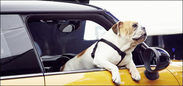 MINI Cooper 2014 Marketing Campaign Bulldog